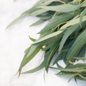 What_is_it_about_Eucalyptus_leaves_that_make_them_so_appealing_These_here_are_some_about_to_be_made_into_a_wreath_for_a_customer.